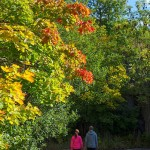 1-autumn