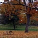 4-autumn