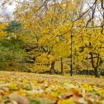 5-autumn